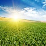 Πράσινο πεδίο με το καλαμπόκι μπλε νεφελώδης ουρανός Στοκ Εικόνα
