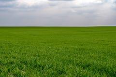 Πράσινο πεδίο σίκαλης Στοκ Φωτογραφία