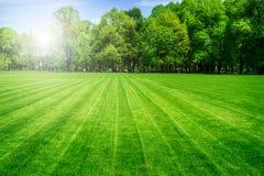 Πράσινο πεδίο χλόης και φωτεινός μπλε ουρανός Στοκ Εικόνες