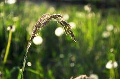 Πράσινο πεδίο χλόης Στοκ εικόνες με δικαίωμα ελεύθερης χρήσης
