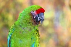 Πράσινο πορτρέτο παπαγάλων του Αμαζονίου με το θολωμένο υπόβαθρο στοκ φωτογραφίες