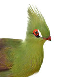 Πράσινο πουλί Turaco Στοκ Εικόνα