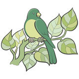 Πράσινο πουλί ελεύθερη απεικόνιση δικαιώματος
