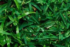 πράσινο πρωί χλόης δροσιάς Στοκ Εικόνες