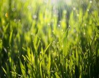Πράσινο πρωί χλόης Στοκ εικόνες με δικαίωμα ελεύθερης χρήσης