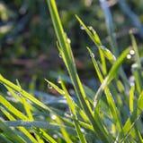Πράσινο πρωί χλόης Στοκ Εικόνες