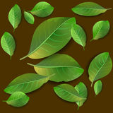 πράσινο πρότυπο φύλλων άνευ ραφής Στοκ Φωτογραφία