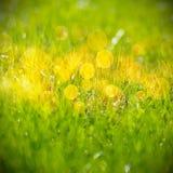 πράσινο πρότυπο χλόης Στοκ φωτογραφία με δικαίωμα ελεύθερης χρήσης