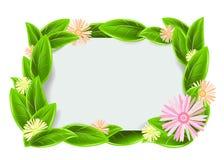 Πράσινο πλαίσιο με τα φύλλα Στοκ Εικόνες