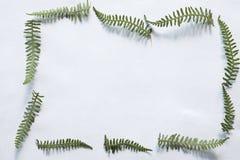 Πράσινο πλαίσιο φτερών Στοκ φωτογραφία με δικαίωμα ελεύθερης χρήσης