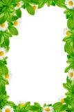 Πράσινο πλαίσιο φύλλων και μαργαριτών Στοκ εικόνα με δικαίωμα ελεύθερης χρήσης