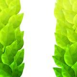 Πράσινο πλαίσιο φύλλων Καλλιτεχνική σύσταση Watercolor Στοκ Εικόνες
