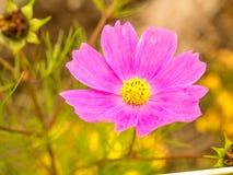 πράσινο ροζ λουλουδιών Στοκ φωτογραφία με δικαίωμα ελεύθερης χρήσης