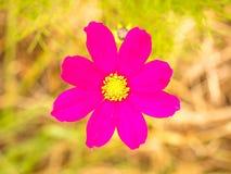 πράσινο ροζ λουλουδιών Στοκ Εικόνες