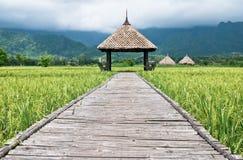 πράσινο ρύζι Ταϊλάνδη πεδίων στοκ εικόνα με δικαίωμα ελεύθερης χρήσης