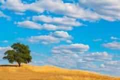 Πράσινο δρύινο δέντρο στο Hill με τα σύννεφα και το μπλε ουρανό Στοκ εικόνα με δικαίωμα ελεύθερης χρήσης