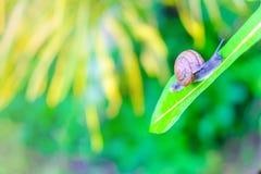 πράσινο σαλιγκάρι στοκ εικόνες με δικαίωμα ελεύθερης χρήσης