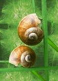 πράσινο σαλιγκάρι στοκ φωτογραφίες με δικαίωμα ελεύθερης χρήσης