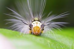 πράσινο σκουλήκι φύλλων Στοκ φωτογραφία με δικαίωμα ελεύθερης χρήσης