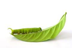πράσινο σκουλήκι φύλλων στοκ φωτογραφίες