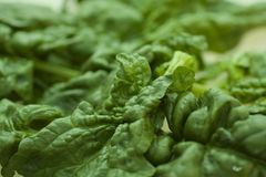 πράσινο σπανάκι Στοκ φωτογραφία με δικαίωμα ελεύθερης χρήσης