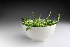 Πράσινο σπορόφυτο με το κύπελλο Στοκ Εικόνες