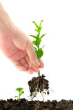 πράσινο σπορόφυτο χεριών Στοκ φωτογραφίες με δικαίωμα ελεύθερης χρήσης