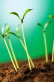 Πράσινο σπορόφυτο Στοκ φωτογραφία με δικαίωμα ελεύθερης χρήσης