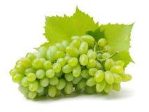 Πράσινο σταφύλι στοκ εικόνα