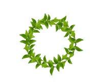 πράσινο στεφάνι φύλλων Στοκ εικόνα με δικαίωμα ελεύθερης χρήσης