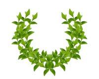 πράσινο στεφάνι φύλλων Στοκ Φωτογραφία