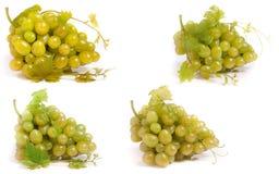 πράσινο συμπεριλαμβανόμενο απομονωμένο λευκό μονοπατιών σταφυλιών ψαλιδίσματος δεσμών ανασκόπησης Σύνολο ή συλλογή Στοκ εικόνες με δικαίωμα ελεύθερης χρήσης
