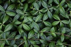 Πράσινο σχέδιο φύλλων με τους κλάδους λεπτομερές ανασκόπηση floral διάνυσμα σχεδίων Στοκ Φωτογραφίες