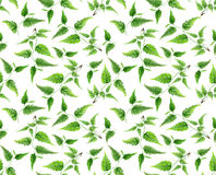 Πράσινο σχέδιο κλάδων στα άσπρα, πράσινα φύλλα Στοκ εικόνες με δικαίωμα ελεύθερης χρήσης