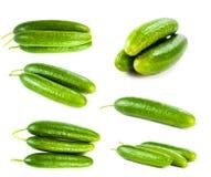 πράσινο σύνολο αγγουριών Στοκ Φωτογραφίες