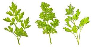 πράσινο σύνολο μαϊντανού Στοκ εικόνα με δικαίωμα ελεύθερης χρήσης