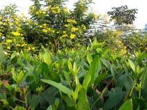 Πράσινο σύνολο φύλλων και λουλουδιών που αφορά τις πρώτες ακτίνες του ήλιου στα ξημερώματα Στοκ Φωτογραφίες