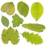 πράσινο σύνολο φύλλων Στοκ Εικόνες