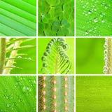 πράσινο σύνολο Στοκ φωτογραφία με δικαίωμα ελεύθερης χρήσης