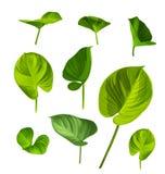 πράσινο σύνολο φύλλων Στοκ Εικόνα