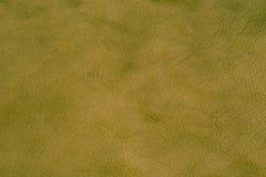 Πράσινο σύσταση δέρματος ή υπόβαθρο δέρματος για το σχέδιο με το αντίγραφο Στοκ Εικόνες