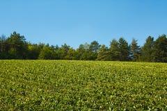 Πράσινο τοπίο με τα δέντρα και τα σταφύλια, Γαλλία Στοκ Φωτογραφία