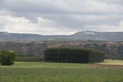 Πράσινο τοπίο με τα δέντρα όπου ένα τρακτέρ βλέπει την εργασία Στοκ Εικόνες