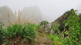 Πράσινο τοπίο με την υδρονέφωση που ρέει πέρα από τις τεράστιες βουνοπλαγιές Πολύβλαστο vegatation της υψηλής πεδιάδας Santo Anta απόθεμα βίντεο