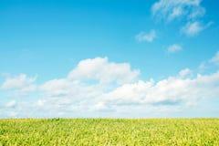 πράσινο τοπίο πεδίων Στοκ εικόνες με δικαίωμα ελεύθερης χρήσης