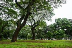 Πράσινο τοπίο στο πάρκο πόλεων τα μεγάλες δέντρα και τη φωτογραφία χλόης που λαμβάνεται με στην Τζακάρτα Ινδονησία Στοκ Φωτογραφία