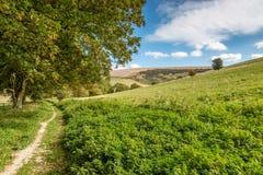 Πράσινο τοπίο του Σάσσεξ στοκ φωτογραφία με δικαίωμα ελεύθερης χρήσης
