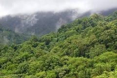Πράσινο τοπίο του coorg, νότος της Ινδίας στοκ εικόνες με δικαίωμα ελεύθερης χρήσης