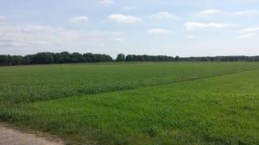 Πράσινο τοπίο χλόης στοκ φωτογραφίες με δικαίωμα ελεύθερης χρήσης