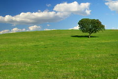 πράσινο τοπίο Στοκ εικόνα με δικαίωμα ελεύθερης χρήσης